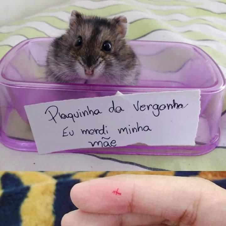 plaquinha-da-vergonha