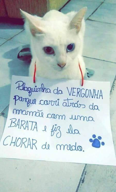 plaquinha-da-vergonha2