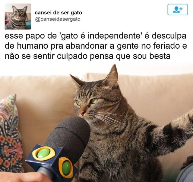 ele-cansou-de-ser-gato2