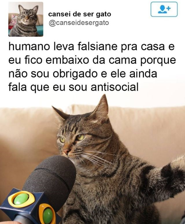 ele-cansou-de-ser-gato4