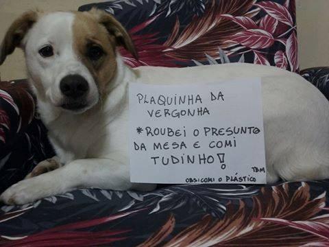 plaquinha-da-vergonha-1