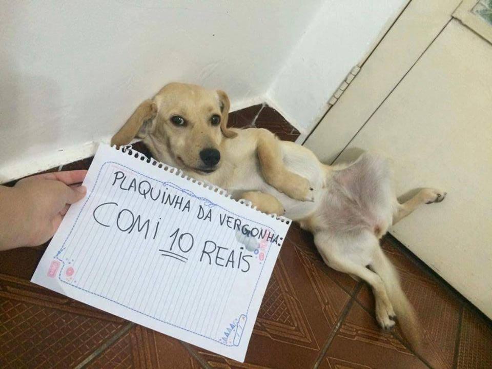 plaquinha-da-vergonha-11