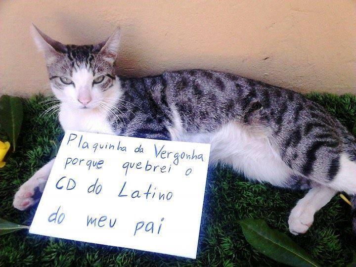 plaquinha-da-vergonha-3