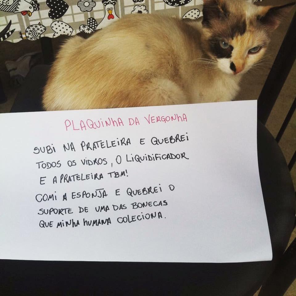 plaquinha-da-vergonha-6