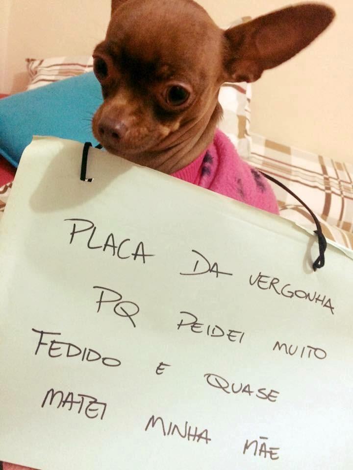 plaquinha-da-vergonha-7