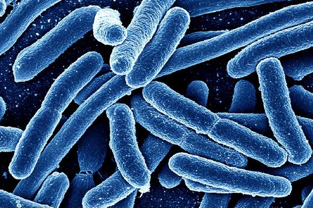 bacteria-resistencia-antibiotico