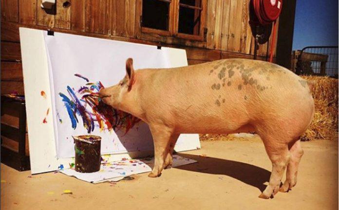 pigcasso-porquinha