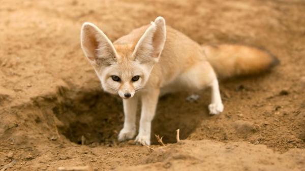 animais-deserto