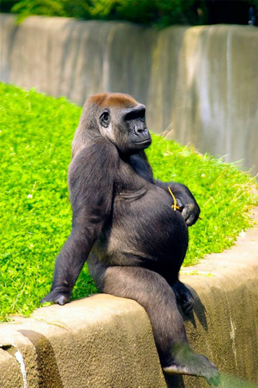 gravidez-animal2